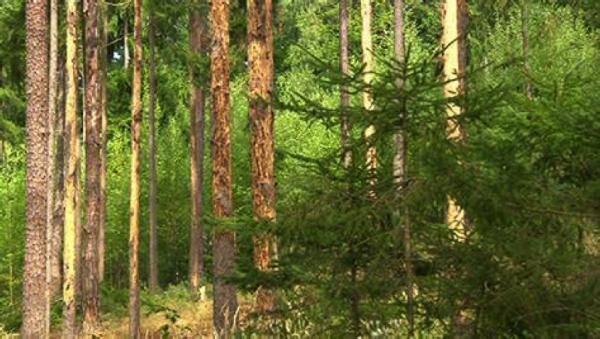 Käferholz